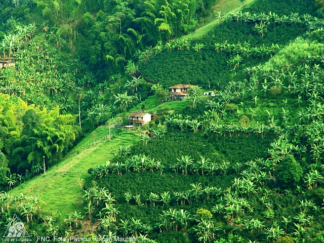 Paisaje cultural del café en Colombia